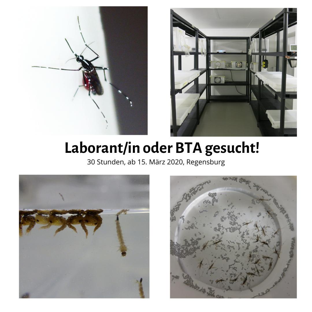 Stellenauschreibung Laborant/in Biogents AG Regensburg
